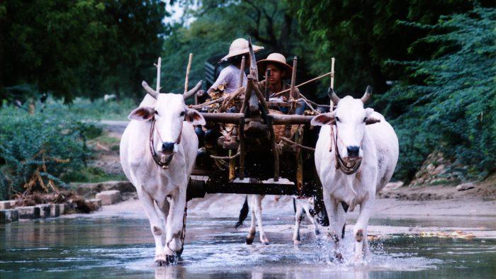 タンディーを運ぶ馬車
